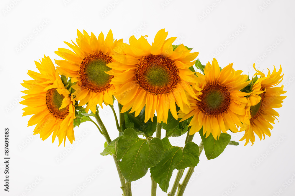 Five yellow sunflowers.
