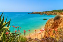 Tropical Flowers On Beautiful Praia Da Rocha Beach, Algarve Region, Portugal