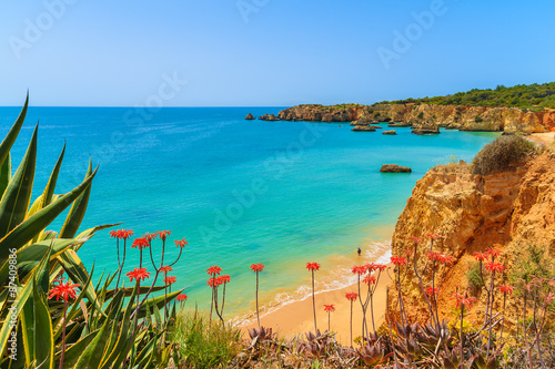 Photo Tropical flowers on beautiful Praia da Rocha beach, Algarve region, Portugal