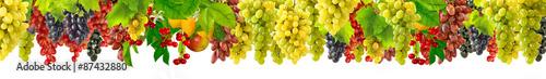 wiele winogron