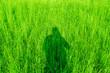 canvas print picture - Der Schatten auf der Wiese