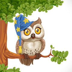 Cute owl wearing a hat sitting on a tree branch isolated on a wh