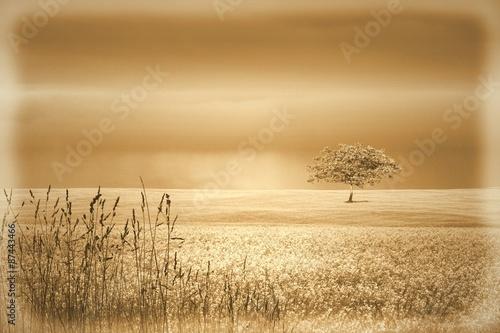 Photo  Vintage sepia landscape with single tree