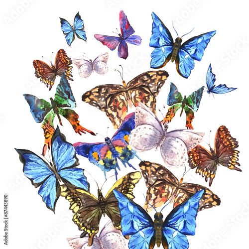 La pose en embrasure Papillons dans Grunge Watercolor butterflies on a white background, greeting card