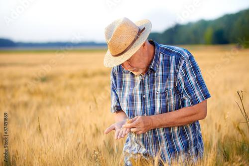 Fotografie, Obraz  Mature farmer with straw hat checks wheat grain