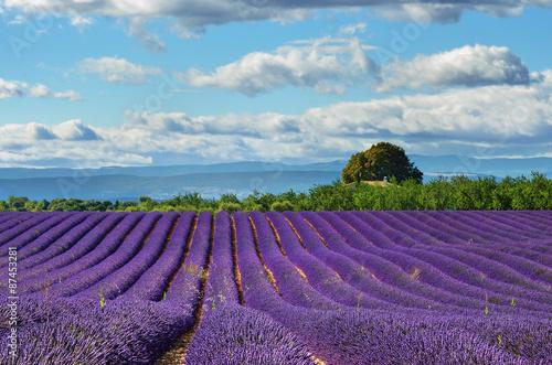 Foto op Aluminium Snoeien Provence, France