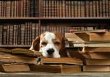 pies w bibliotece
