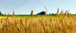 canvas print picture - Wheat field agriculture