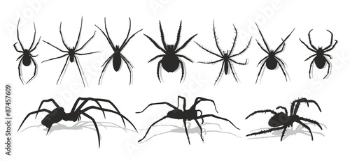Photo  Set of silhouettes of spiders.