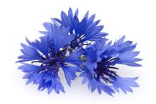 Kornblume; Centaurea; Cyanus; ...