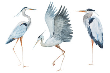 Obraz Watercolor heron birds
