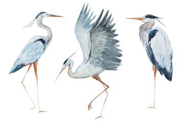 NaklejkaWatercolor heron birds