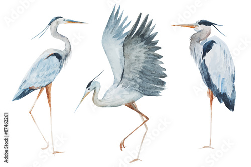 Cuadros en Lienzo Watercolor heron birds