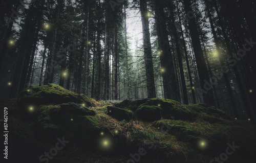 Spoed Fotobehang Bos magical lights sparkling in mysterious forest at night