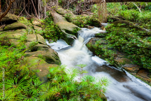 Staande foto Tuin Small stream in jungle