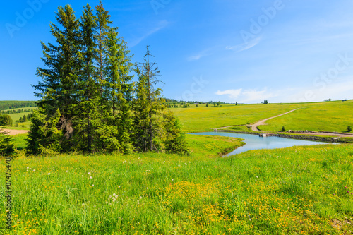 Poster Lime groen Green meadow with flowers and beautiful lake in summer landscape of Tatra Mountains, Slovakia