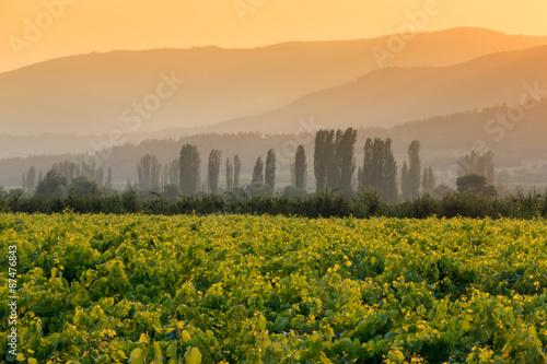 Photo Vineyard - Üzüm bağı