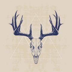 fototapeta zzaszka jelenia