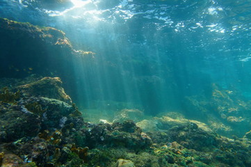 Promienie słoneczne podwodne oglądane z dna morskiego na rafie