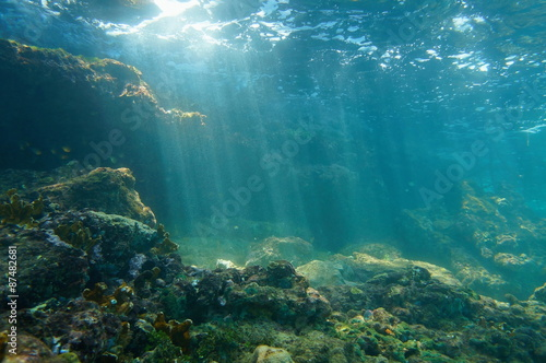 Stampa su Tela Sunbeams underwater viewed from seabed in a reef