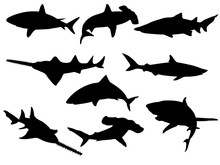 Set Of Shark Silhouettes. Vect...