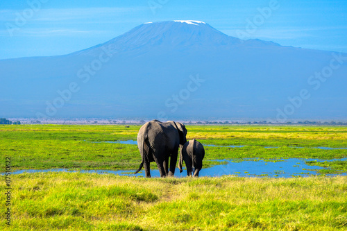 Fotografie, Obraz  Beautiful Kilimanjaro mountain and elephants, Kenya,Amboseli national park, Afri