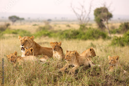 Fotobehang Leeuw Little lion cubs relaxing