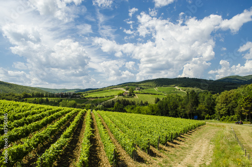 vineyards in Tuscany Chianti area Fototapet