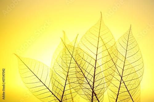 Poster Squelette décoratif de lame Skeleton leaves on yellow background, close up