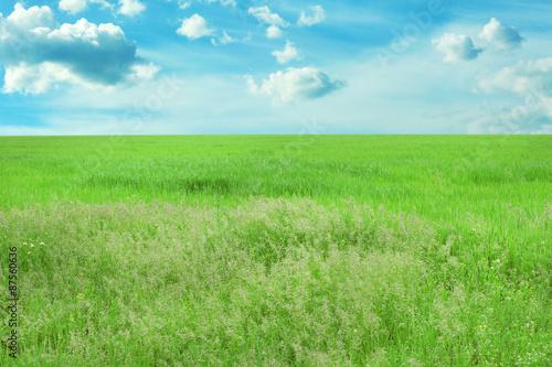 Foto op Plexiglas Weide, Moeras Green spring field