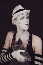 Mime With A Gray British Cat