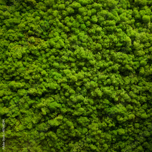 Fotografie, Obraz  Moss texture