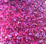 Beautiful purple orchid background