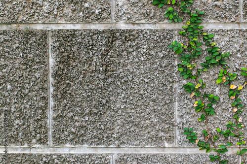 Carta da parati Green Creeper Plant on wall