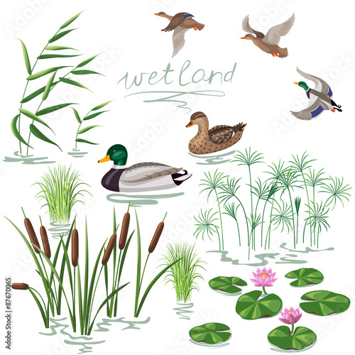 Wetland Plants and Ducks Set Wallpaper Mural