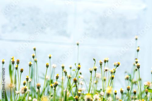 Foto op Plexiglas Landschappen Little Flower on Light Blue background