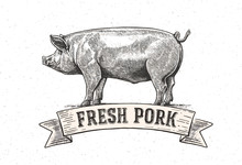 """Graphic Pig With The Inscription:""""Fresh Pig"""". Vector Illustration Drawn, By Hand."""