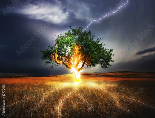 Photo sur Toile Marron chocolat Lightning Tree