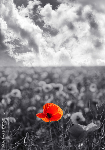 Foto op Aluminium Poppy Red poppy flowers for Remembrance Day / Sunday
