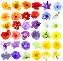 Beautiful Flowers Collage
