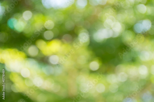 Fototapety, obrazy: abstract blur green for background