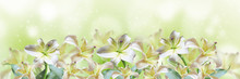 Abstract Spring Background With Beautiful Lily Flowers
