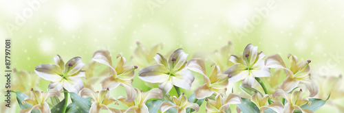 Photo  Abstract spring background with beautiful lily flowers