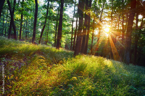 The bright sun rays shining through branches of trees, wood land