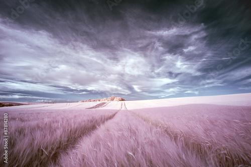 Fotografia Stunning surreal false color infrared Summer landscape over agri
