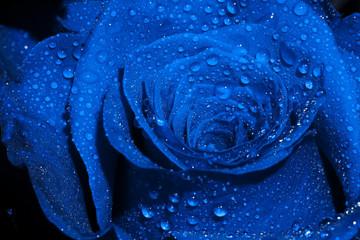 Obraz na SzkleBlue Rose with Droplets