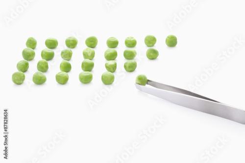 Obraz na plátně  Grüne Erbsen mit Pinzette auf weißem Hintergrund