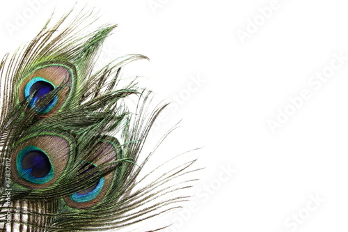 Tuinposter Pauw Peacock Feather