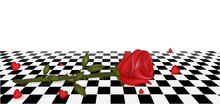 Rose On The Floor. Chess Board