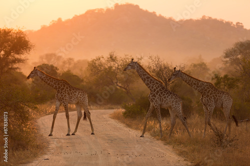 Deurstickers Giraffe Giraffes At Sunrise